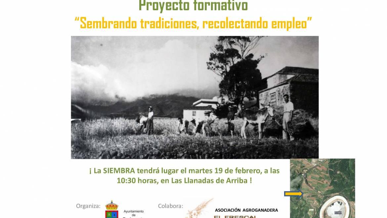 Barlovento recupera la siembra del trigo como valor histórico y económico para el Municipio